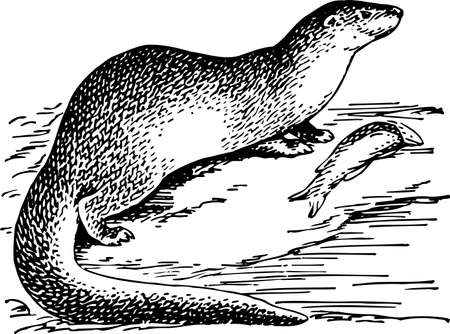 riverine: Otter