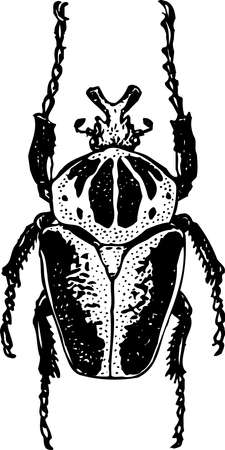 mandible: Beetle Illustration