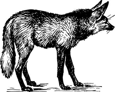steppe: Fox