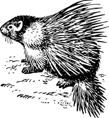 defiance: Porcupine