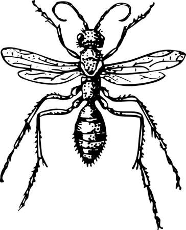 bothersome: Insect