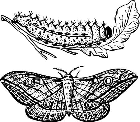 milkweed: Larva and butterfly