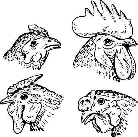 wader: Heads of hens and cock Illustration