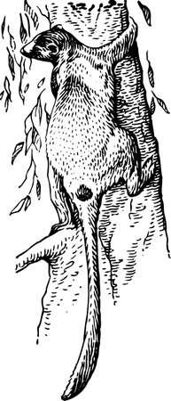 tailed: Lemur on the tree