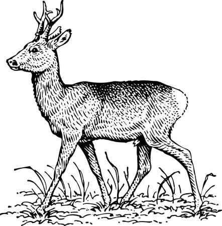 Deer Stock Vector - 10397533