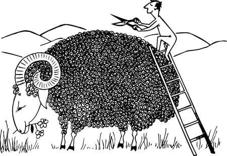 merino sheep: Sheep shearing Illustration