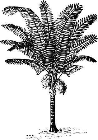 Palm tree Stock Vector - 10402286