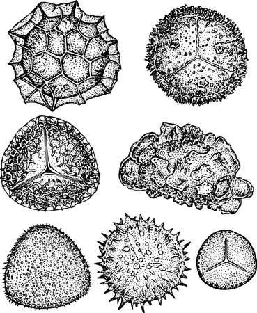 microscopisch: Sporen Stock Illustratie