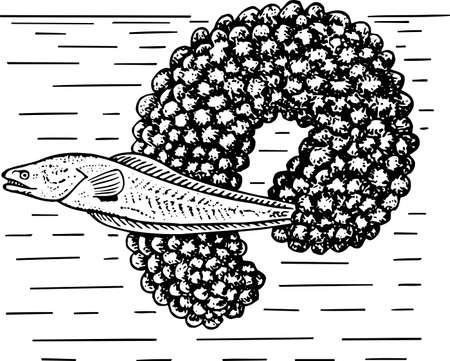 caviar: Fierasferidae