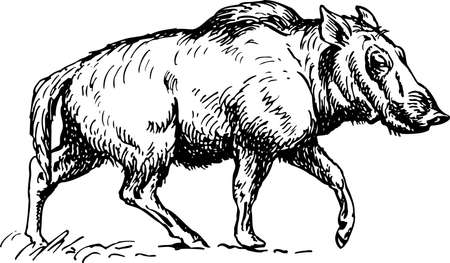 paleontology: Hell Pigs (Entelodont)