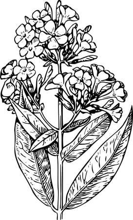 Flower on white Stock Vector - 10402193