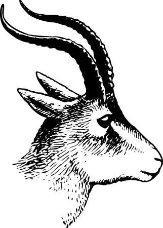 Goat head Stock Vector - 10402168