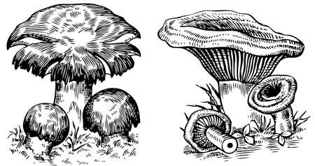 toxic mushroom: Mushrooms on white