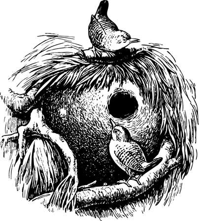 animal nest: Wren (troglodytes)