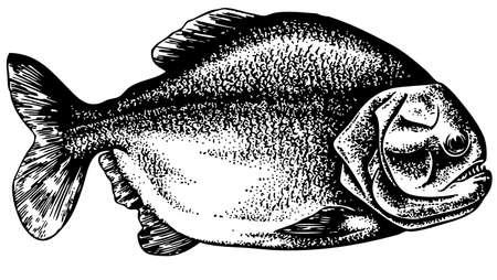 Piranha Stock Vector - 10403032