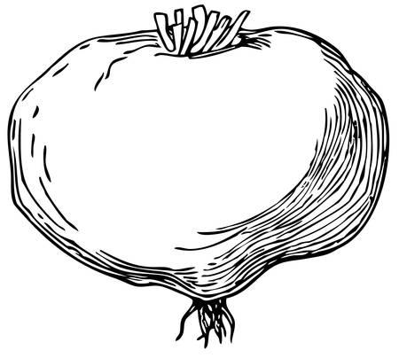 maca: Maca (Lepidium meyenii)