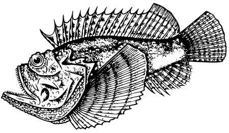 stonefish: StoneFish Illustration