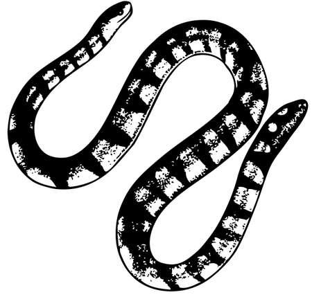 Snake Stock Vector - 10402663