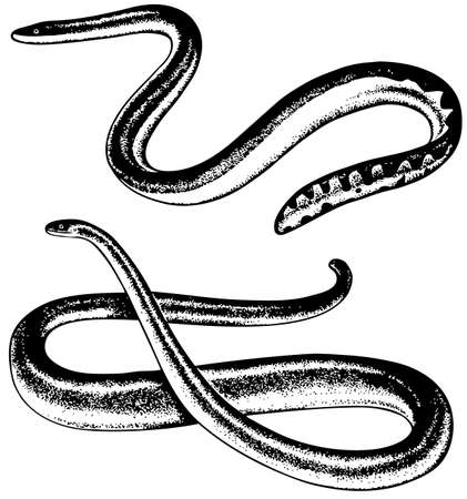 Snakes Stock Vector - 10403037