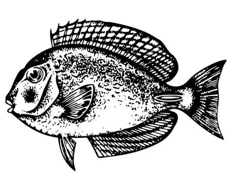 Fish on white