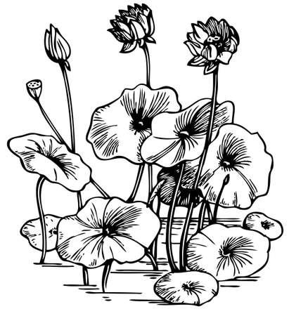 lily pad: Lotus
