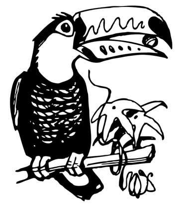 brasil: Toucan