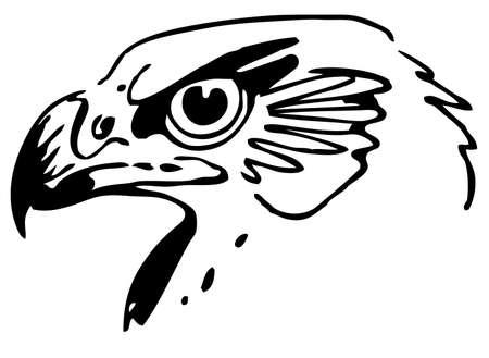 Hawk Stock Vector - 10402406