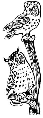 Owls on the branch Vector