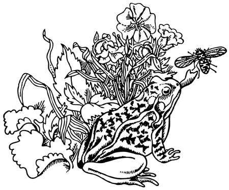 snatch: Frog catching fly Illustration