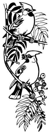 ornithology: Birds