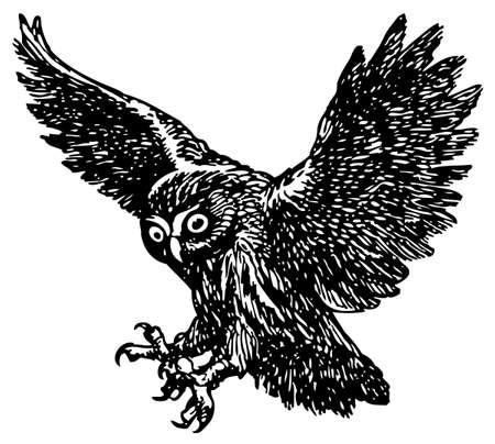 paper flying: Owl Illustration