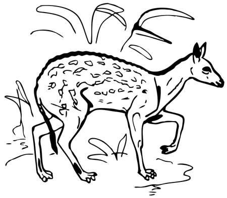 roe: Roe deer