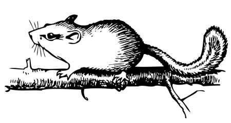 dormouse: Forest Dormouse Illustration