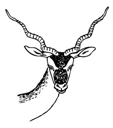 carnero: Cabra Vectores