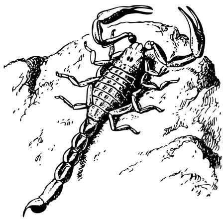 Scorpion Stock Vector - 10402738