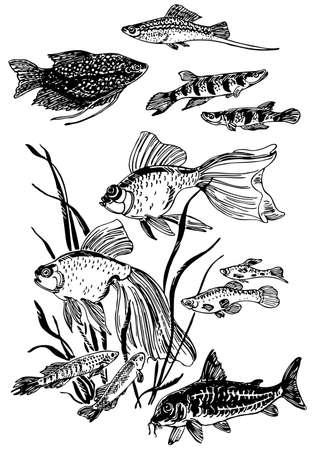 underwater light: Aquarium fishes