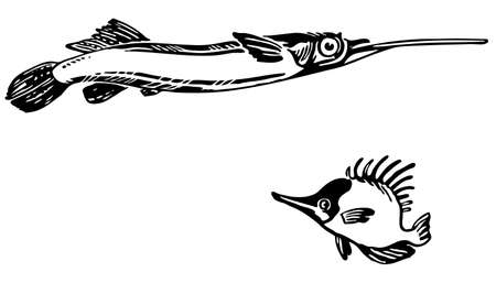 naso: Dermogenys pusillus and Naso unicornis