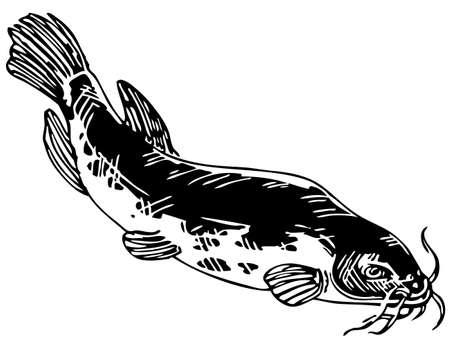 catfish: Electric catfish