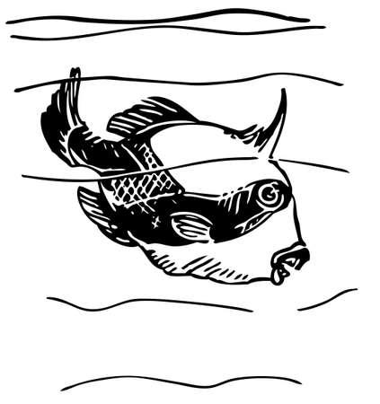 Grey triggerfish Stock Vector - 10402622