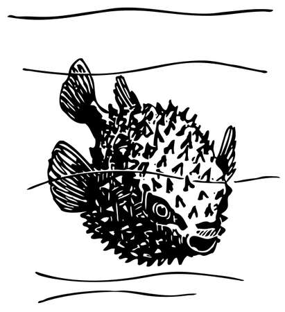 seawater: Porcupinefish Illustration