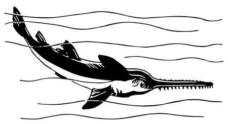 sea saw: Sawfish