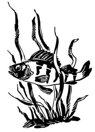white: Fish on white Illustration