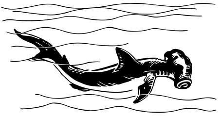 pez martillo: Tiburón martillo Vectores