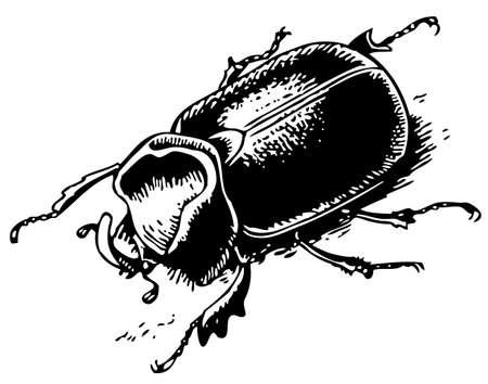 Rhinoceros beetle Stock Vector - 10402416