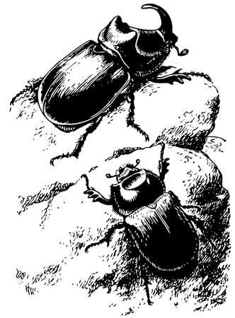 escarabajo: Escarabajo rinoceronte Vectores