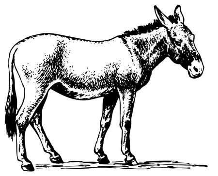 side: Donkey Illustration