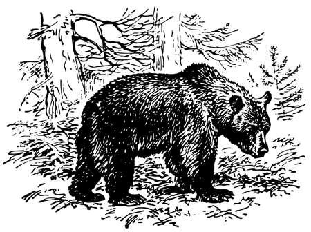Brown bear Stock Vector - 10402949