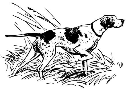 pointer dog: Pointing breed