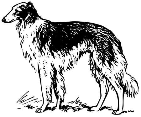 domesticated: Sighthound