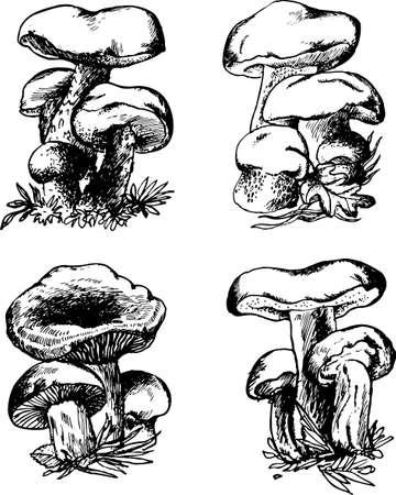 mushroom cartoon: Mushrooms on white